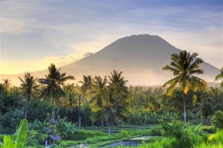 Bali Trees Volcano Rice Fields