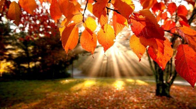 Portrait of Fall