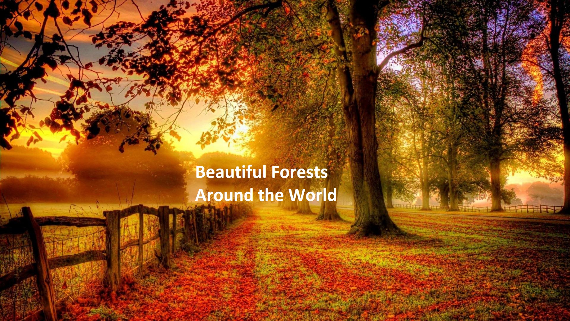 Beautiful Forests Around The World